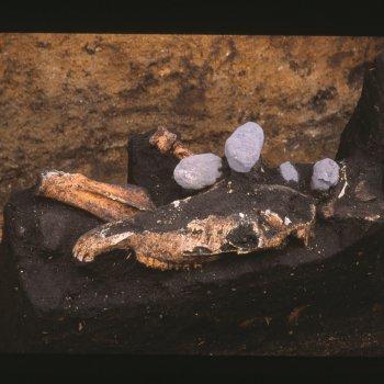 馬骨(頭蓋骨の頂部が打ち欠かれている)